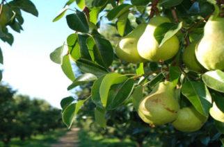 Θράκη: Στροφή στην δενδροκαλλιέργεια