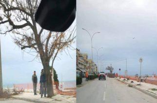 Αλεξανδρούπολη: Έκοψαν πρωί-πρωί όλα τα δένδρα της παραλιακής οδού