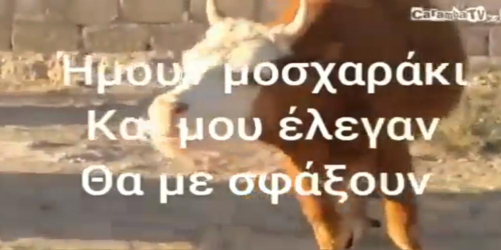 ΒΙΝΤΕΟ: Ο Αγροτικός Κτηνοτροφικός Σύλλογος απαντά σε Λαμπάκη: Το μοσχαράκι έγινε αγελάδα και ακόμα να το σφάξουν