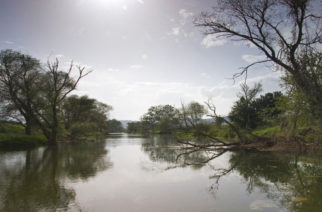 WWF Impact Ventures: Δημιουργία επιχειρήσεων στη Δαδιά με κεντρικό άξονα δράσης την ανάδειξη φυσικών οικοσυστημάτων