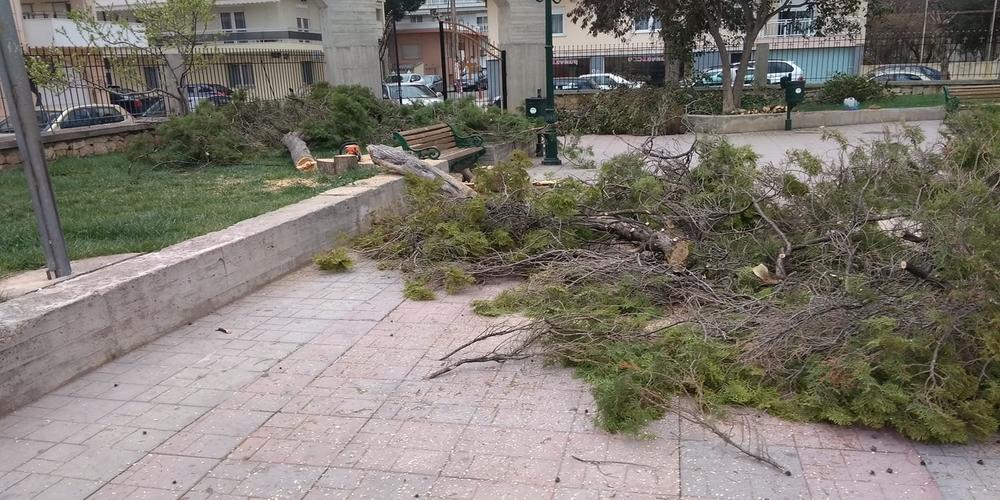 Αλεξανδρούπολη: Έκοψαν και τα δέντρα στον Άγιο Ελευθέριο – Δεν θα αφήσουν τίποτα όρθιο