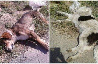 Δήμος Ορεστιάδας: Μηνύσεις κατ' αγνώστων για την θανάτωση με φόλες τριών σκύλων και μιας γάτας