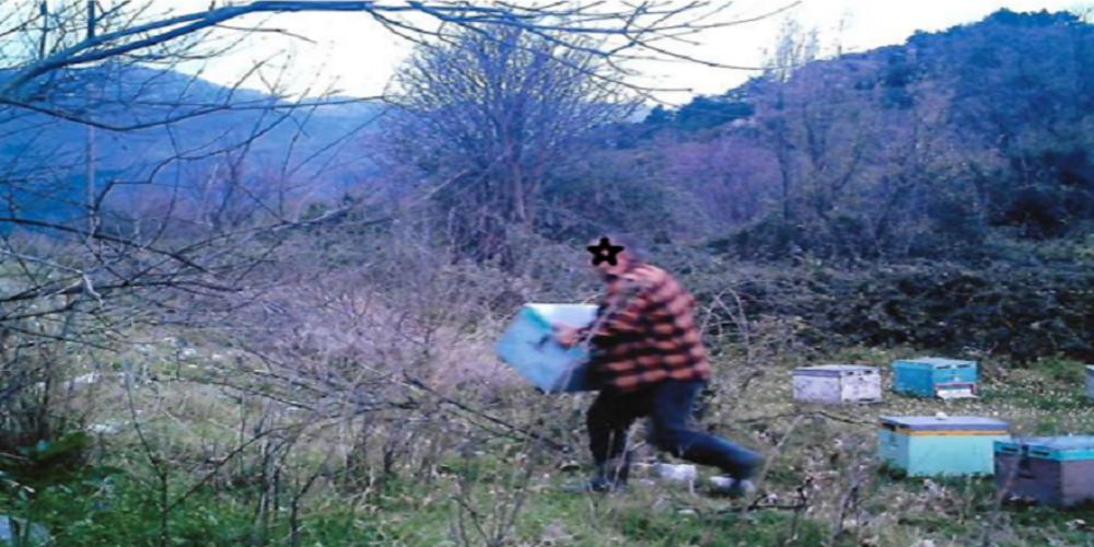 """Έκλεψε τον Μάρτιο 115 κυψέλες με μέλισσες, αλλά τον """" τσίμπησε"""" τελικά η αστυνομία"""