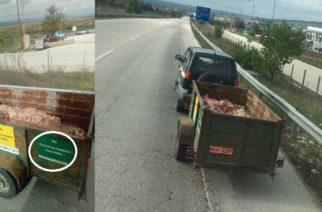 Αποκρουστικό, μήπως και… επικίνδυνο να μεταφέρονται έτσι τα στερεά απόβλητα του Δημοτικού Σφαγείου Ορεστιάδας;