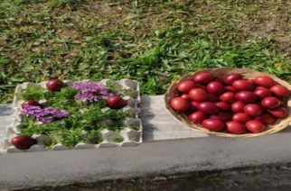 Μουσείο Τέχνης Μεταξιού  – Μαθητές έβαψαν αυγά με ριζάρι