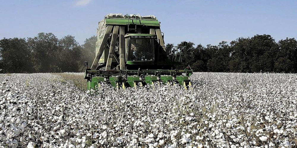 Μπήκαν τα χρήματα της Συνδεδεμένης βάμβακος στους αγρότες του Έβρου που δεν είχαν πληρωθεί