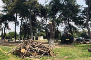Η απάντηση του δήμου Αλεξανδρούπολης για την κοπή των δέντρων στην περιοχή της Αγ. Παρασκευής