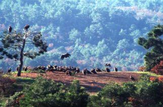Σουφλί: Δημοπρατείται το σύστημα ανίχνευσης πυρκαγιών στο δάσος Δαδιάς-Λευκίμης