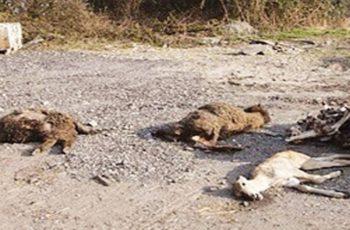 Πρόγραμμα διαχείρισης νεκρών ζώων και προϊόντων ζωικής προέλευσης στην Περιφέρεια ΑΜΘ