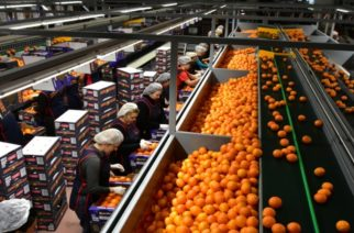 Περιφέρεια ΑΜ-Θ: Πρόγραμμα μεταποίησης, εμπορίας γεωργικών προϊόντων για μικρομεσαίες επιχειρήσεις