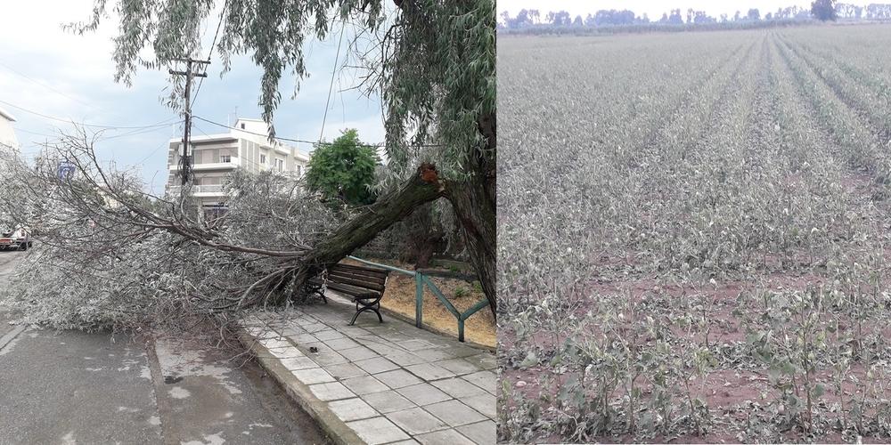 Μεγάλες ζημιές από μπουρίνι με χαλαζόπτωση στις περιοχές Πέπλου, Φερών και Σουφλίου (ΒΙΝΤΕΟ+φωτό)