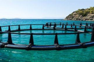 Χορήγηση ενισχύσεων de minimis για ζημιές στον τομέα των Υδατοκαλλιεργειών