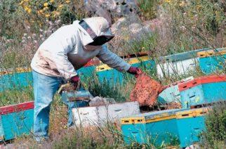 ΘΡΗΝΟΣ στην περιοχή της Ορεστιάδας – Νεκρός 42χρονος από τσίμπημα μελισσών!!!
