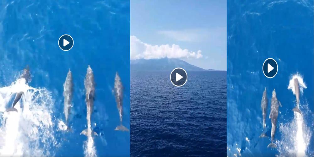 ΒΙΝΤΕΟ: Πανέμορφα δελφίνια του Θρακικού πελάγους συνοδεύουν το ταξίδι προς Σαμοθράκη