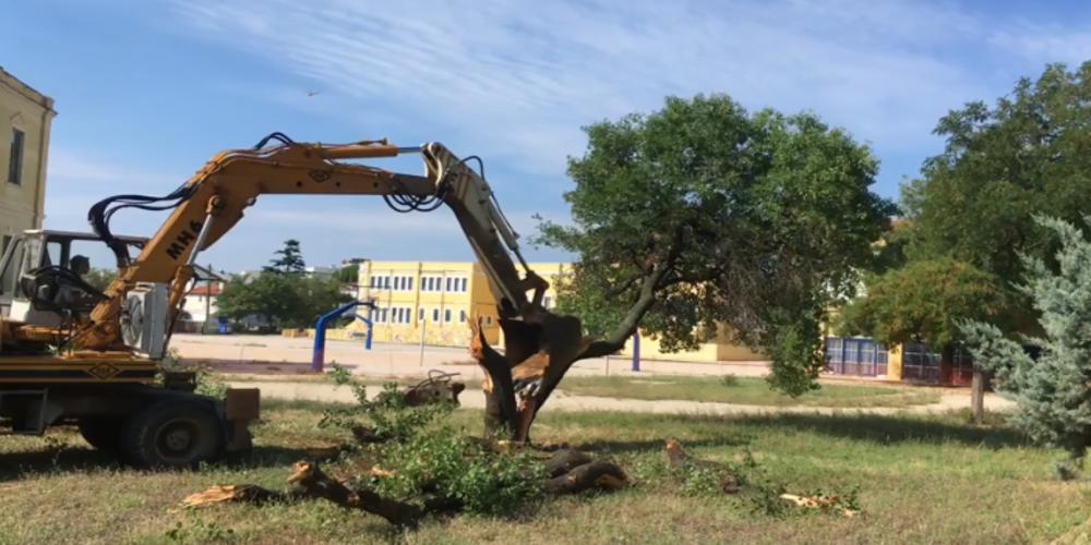 """ΒΙΝΤΕΟ: Η απερχόμενη δημοτική αρχή Λαμπάκη, """"εξαφάνισε"""" 4 δέντρα από το προαύλιο του 1ου Δημοτικού"""