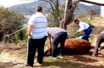 Κουρμπάν Μπαϊράμ: Οδηγίες για την σφαγή των ζώων στην θρησκευτική γιορτή των μουσουλμάνων