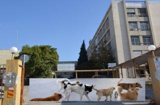 Αλεξανδρούπολη: Αγέλη αδέσποτων επιτίθεται στους περαστικούς στο παλιό Νοσοκομείο – Διαμαρτύρονται προς κάθε υπεύθυνο