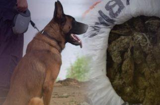 """Αλεξανδρούπολη: Έκρυβε στο σπίτι του ναρκωτικά, τα """"μύρισε"""" αστυνομικός σκύλος και συνελήφθη"""
