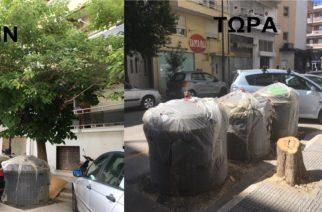"""Αλεξανδρούπολη: Έκοψαν δέντρο 6 μέτρων, αφού πρώτα """"φύτεψαν"""" από κάτω τους ημιϋπόγειους κάδους!!!"""