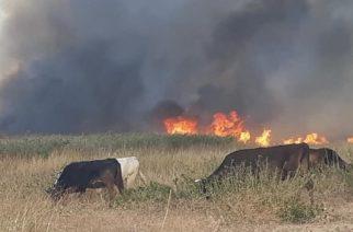 Έκαψε πολλά στρέμματα σπάνιου βιότοπου στο Δέλτα Έβρου, η πυρκαγιά που έσβησε χθες βράδυ (ΒΙΝΤΕΟ)