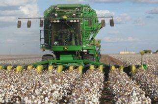 Συμβουλές στους βαμβακοκαλλιεργητές για τις ενέργειες μετά την συγκομιδή ώστε ν' αποφύγουν το σκουλήκι