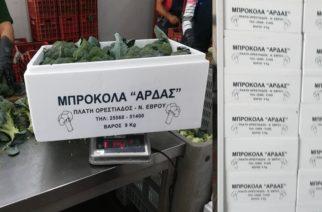 Τα μπρόκολα Έβρου του συνεταιρισμού ΑΣΚΓΕ Άρδας, κατακτούν και φέτος όλη την Ελλάδα