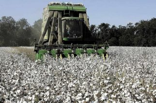 """Ομοσπονδία Αγροτικών Συλλόγων Έβρου """"Η ΕΝΟΤΗΤΑ"""":  Απαράδεκτα χαμηλές τιμές στο βαμβάκι προσφέρουν τα εκκοκιστήρια"""