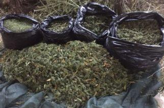 Ορεστιάδα: Συνέλαβαν 26χρονο, ενώ έκρυβε ναρκωτικά σε δασική περιοχή του Διδυμοτείχου