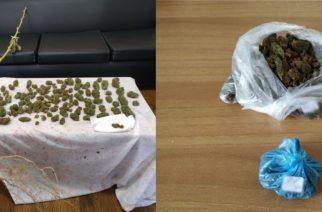 Αλεξανδρούπολη: Είχε… τρυγήσει το χασισόδεντρο 40χρονος, αλλά συνελήφθη αφού ο αστυνομικός σκύλος… μύρισε τα ναρκωτικά