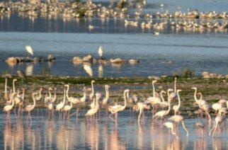 Άγρια καταδίωξη το πρωί στο Δέλτα του Έβρου – Δυο συλλήψεις για 1 τόνο ακατάλληλα όστρακα