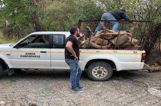 Σαμοθράκη: Με δωρεάν ξύλα για τον χειμώνα στηρίζει ο δήμος τις οικογένειες που έχουν ανάγκη