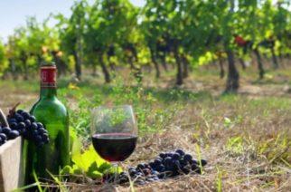 Σουφλί: «Σεμινάριο εκπαίδευσης αμπελουργών και οινοποιών για την βελτίωση της ποιότητας του παραγόμενου οίνου»