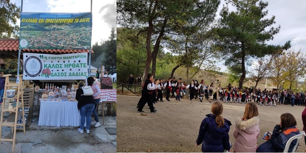 Με πολύ κόσμο και μεγάλη επιτυχία η 11η Γιορτή Μανιταριών στο δάσος Δαδιάς (φωτορεπορτάζ)