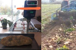 Πατάτα-γίγας, κοντά στα 2 κιλά, έβγαλε αγρότης στο Τυχερό Σουφλίου