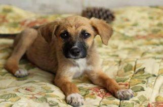 Ημέρα υιοθεσίας σκύλου αύριο Σάββατο από τον δήμο Αλεξανδρούπολης