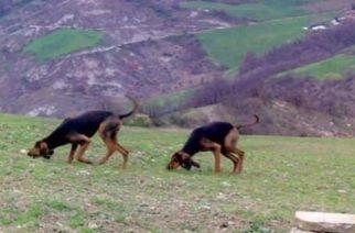 Δηλητήριασαν και σκότωσαν κυνηγόσκυλα με φόλες-κιμά, καταγγέλει ο Κυνηγετικός Σύλλογος Αλεξανδρούπολης