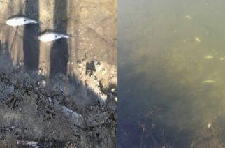Βούλγαροι-Συναγερμός: Μιλούν για σοβαρή μόλυνση στον ποταμό Έβρο και τοξική δηλητηρίαση ψαριών