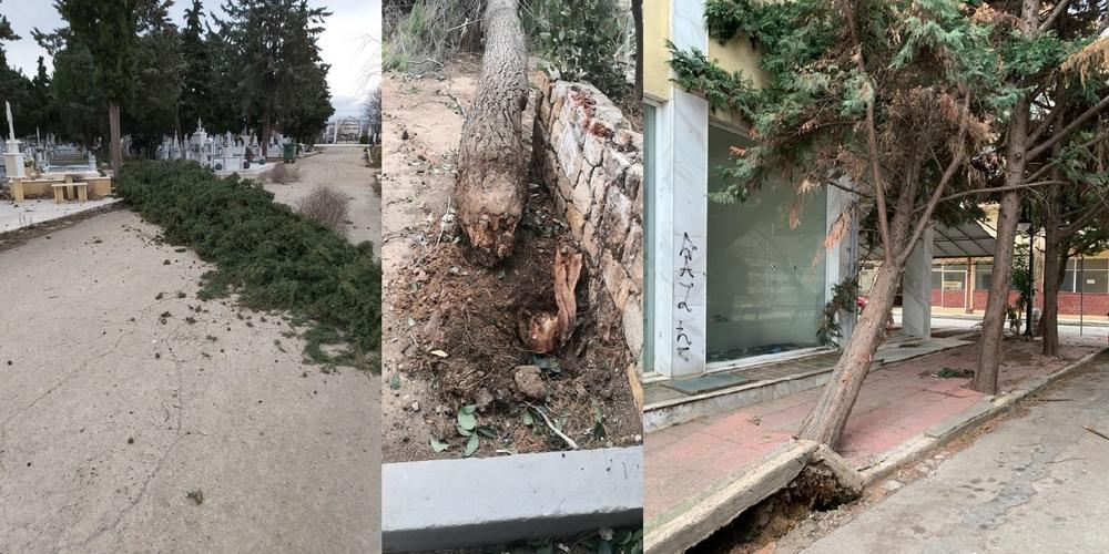 Αλεξανδρούπολη: Ζημιές με πτώσεις δέντρων απ' τους θυελλώδεις ανέμους – Συστάσεις του δήμου στους πολίτες