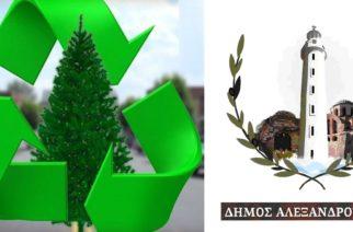 Ανακύκλωση φυσικών χριστουγεννιάτικων δέντρων από τον Δήμο Αλεξανδρούπολης