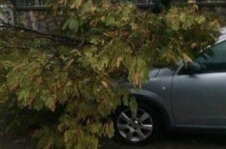Δήμος Αλεξανδρούπολης: Αποζημιώνει πολίτη για ζημιές στο αυτοκίνητο του από σπασμένα κλαδιά δημοτικού δέντρου