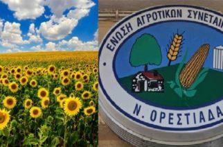 Πετυχημένη συμφωνία από την ΕΑΣ Ορεστιάδας για την τιμή του ηλίανθου – Πόσο θα πουληθεί