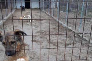 Ορεστιάδα: Δόθηκε στον δήμο άδεια ίδρυσης καταφυγίου αδέσποτων ζώων στο Νεοχώρι
