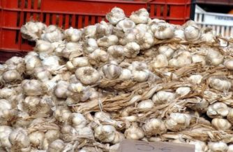 Ξεπούλησαν τα σκόρδα τους λόγω κορωνοϊού, οι παραγωγοί του Έβρου