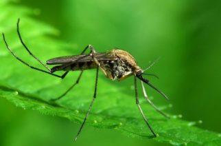 Έρχονται τα… κουνούπια – Μεταδίδουν τον κορονοϊό; Τι λένε οι ειδικοί