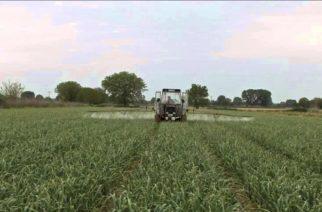 Άμεση ανάγκη για εργάτες γης και στον Έβρο – Σε κίνδυνο οι καλλιέργειες