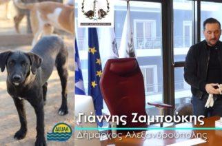 Έκπτωση 50% στους λογαριασμούς της ΔΕΥΑ Αλεξανδρούπολης για όσους υιοθετήσουν αδέσποτο ζώο