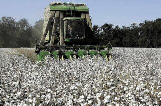 Υπογράφηκαν οι αποζημιώσεις των αγροτών του Έβρου, για τις ζημιές σε βαμβάκι και σιτηρά