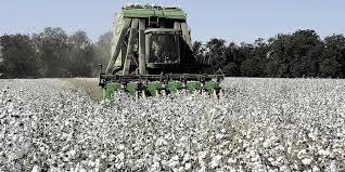 ΕΚΤΑΚΤΟ: Μπήκαν πριν λίγο στους λογαριασμούς των αγροτών οι αποζημιώσεις για βαμβάκι, σιτηρά
