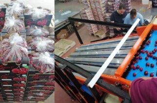 Ξεκίνησε η διαλογή, συσκευασία και πώληση των πεντανόστιμων, εβρίτικων κερασιών απ' τον ΑΣΚΓΕ Άρδας