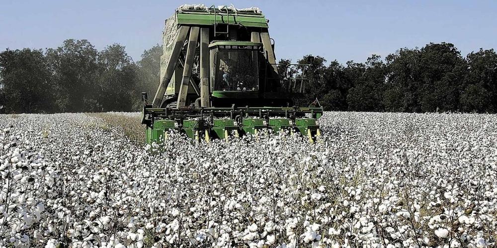 Έβρος: Ως την Τρίτη θα πληρωθούν οι αποζημιώσεις για βαμβάκι, σιτηρά στους αγρότες